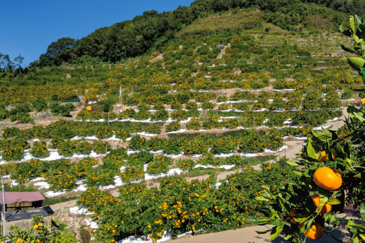 アグリファンフェスタの会場となっているのは早和果樹園の「上伝(うえでん)」という園地