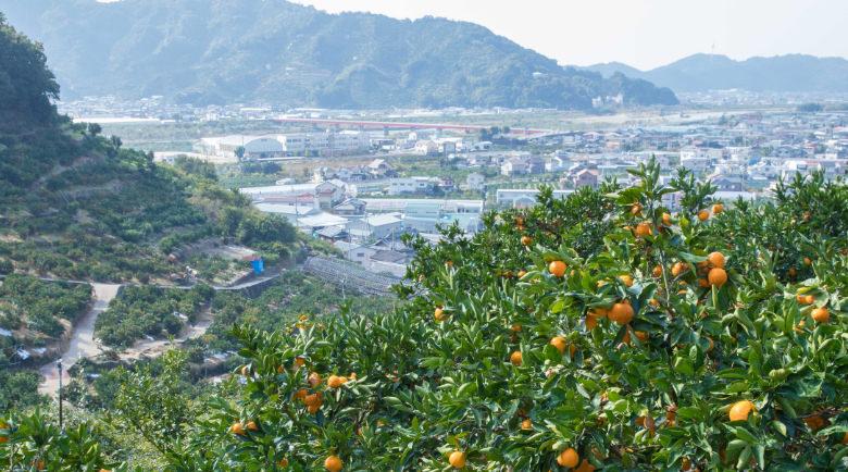 和歌山県産の有田みかん