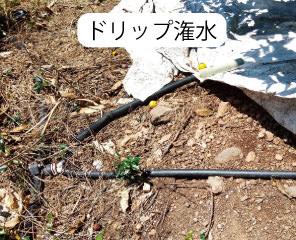 ドリップ潅水システム