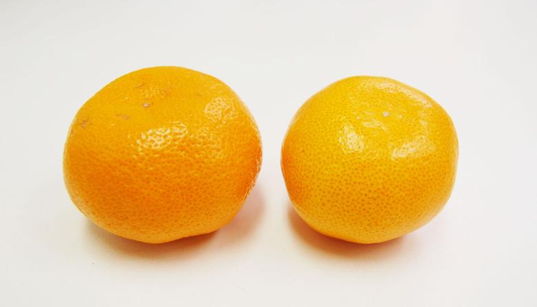 果皮がなめらかで油胞が細かいみかん 果皮が粗く、油胞が大きいみかん