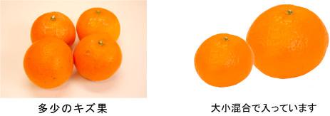 大きい果実と小さい果実が混在します