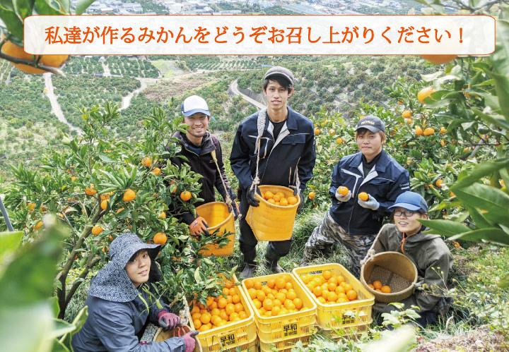 早和果樹園の生産部のみかんをお召し上がり下さい。