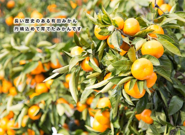 早和果樹園の取り扱う冬みかんブランド