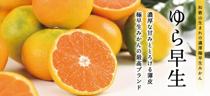 和歌山県産ゆら早生みかんの販売ページはこちら